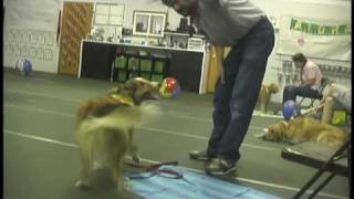 Bridget Brady On Americas Dog Trainer (1 Of 2)