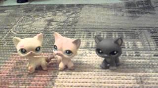Видео пет шоп 3 кошки стоячки