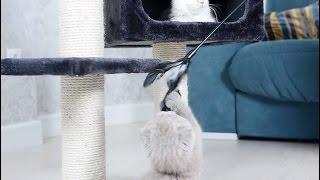 Домик и игрушки для кота: советы ветеринара