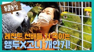 앵무새 앵두×고니, 레전드 선배들과의 개인기 대결! I TV동물농장 (Animal Farm)   SBS St…