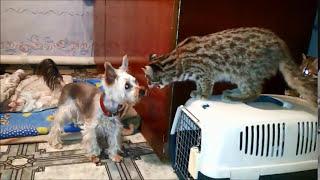 Дальневосточные лесные котята и щенок.Первое знакомство .