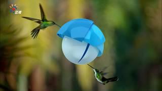 「生態全紀錄-蜂鳥的奇幻旅程」promo