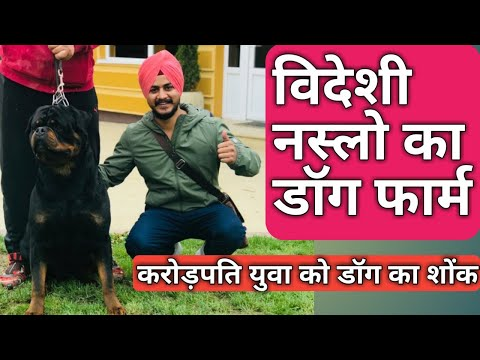 dog farming business in india