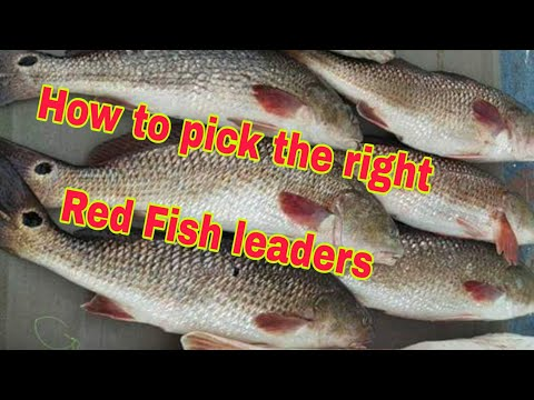 Red Fish Leaders Uses And How To