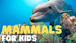 Mammals For Kids   Learn all about the unique characteristics of mammals and what mammals are!