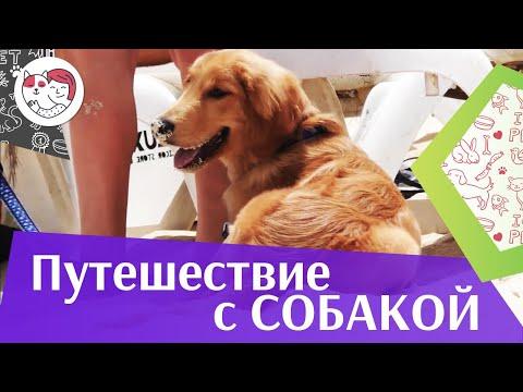 4 совета, как подготовить собаку к переезду в жаркие страны, на ilikepet