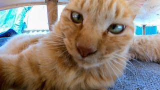 今日の猫集会はテーブルの下でするニャン