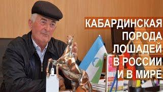 Кабардинская порода лошадей в России и в мире. Агроэкспедиция в Кабардино-Балкарию