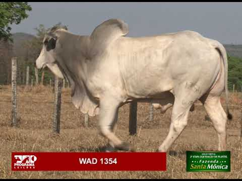LOTE 27 - WAD 1354