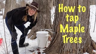 DIY Maple Syrup- Part I