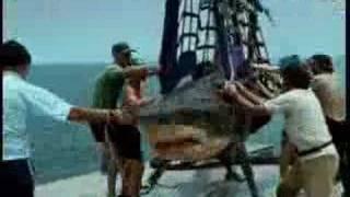 Hombre tragado por tiburon