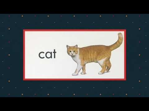 Picture Word Flash Cards - with music and animal sounds