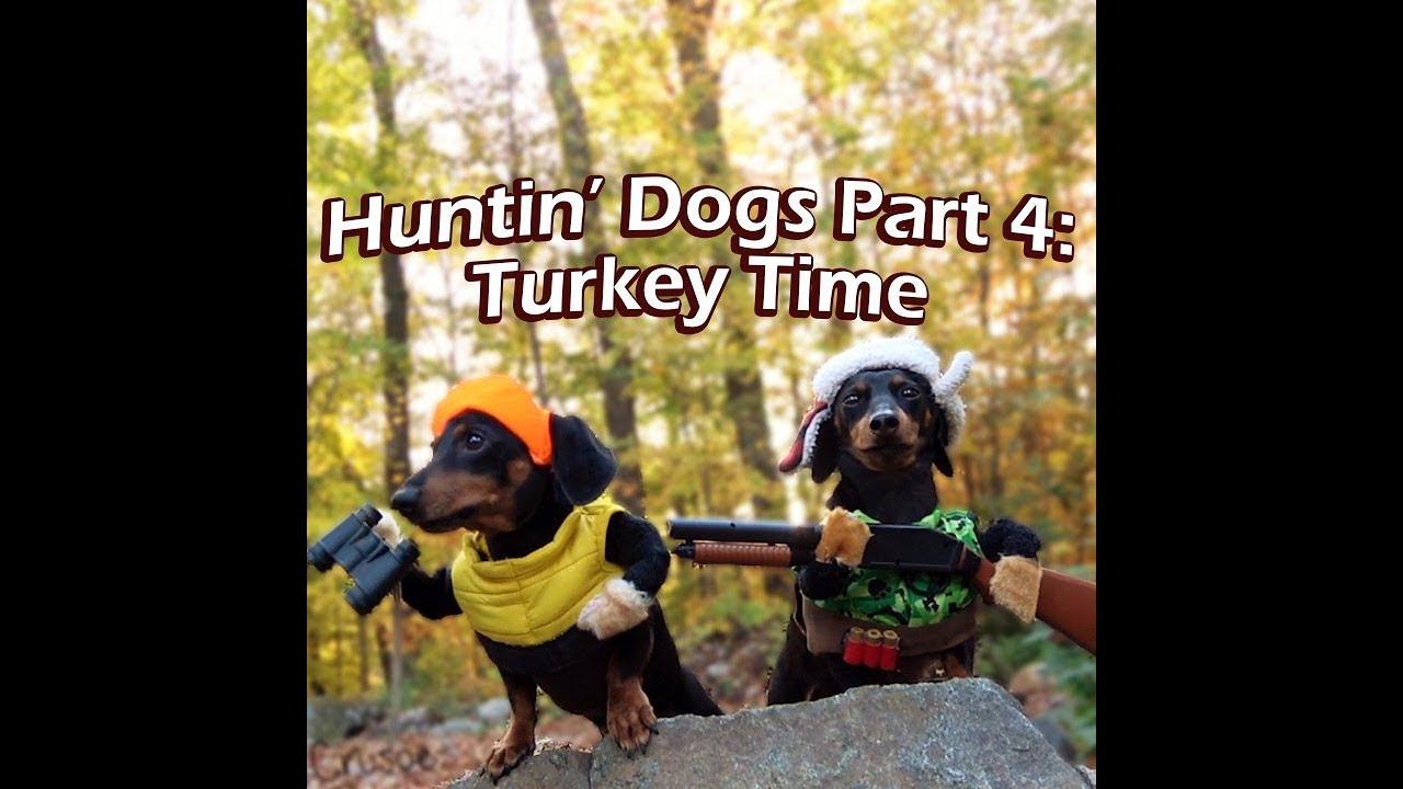 Crusoe Oakley The Huntin Dogs Turkey Time Youtube