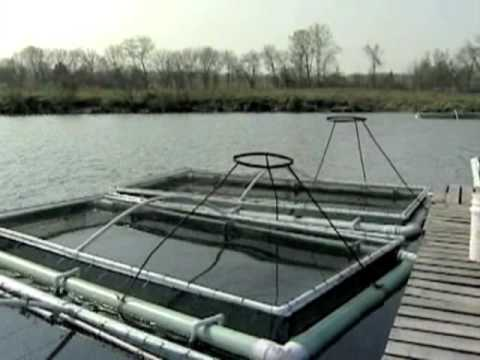Fish Farming Cage systems