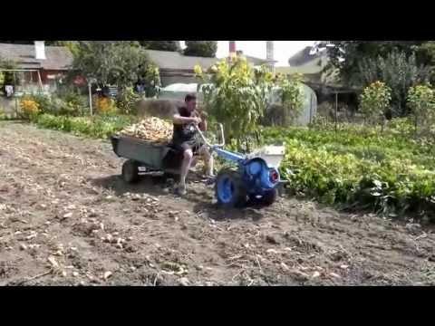 Recolte pomme de terre 2012 youtube - Race de pomme de terre ...