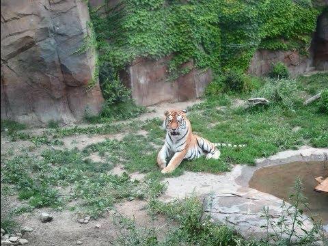 Erie Zoo - Erie Pennsylvania - Summer 2011 Part 5