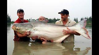 Рыбалка на озере в Тайланде Рыбы гиганты Пангасиус Он такой