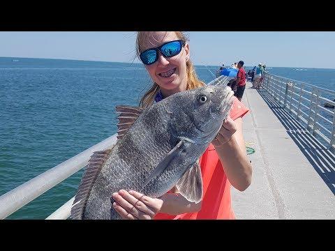 Jetty Fishing  |  Catching Monster Black Drum