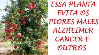Romã Planta evita piores Doenças, Alzheimer Câncer e muitas outras