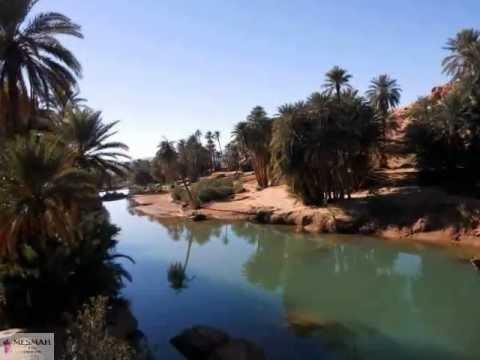 AIN SEFRA 12 L'oasis de tiout