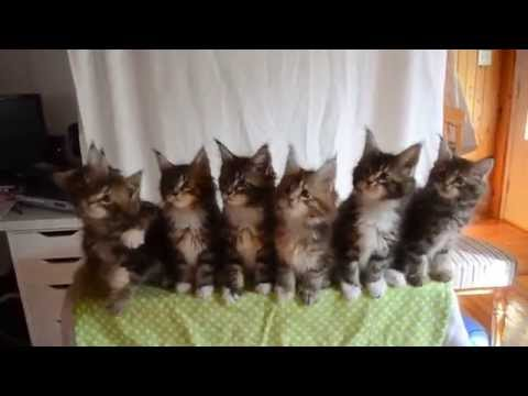 7 Kittens Bob Their Heads in Perfect Unison