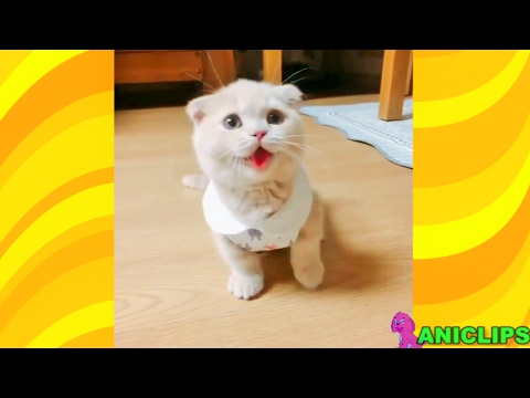 Cat Thinks It's A Dog, Does Dog Tricks  ✯ Funny Cats Compilation 2017