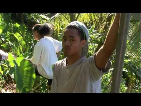 Taro, Banana, Yam Culture in Samoa