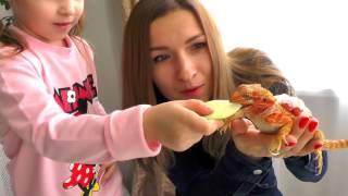 мИСС СОФИЯ И ФРЭНК 2017 ГОДА