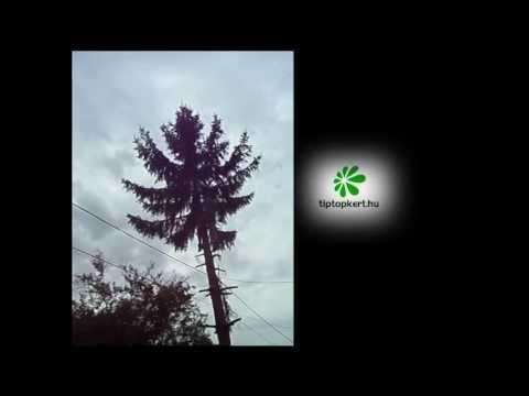 fakivágás, veszélyes fák kivágása letöltés