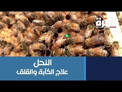 تربية النحل.. علاج الكآبة والقلق