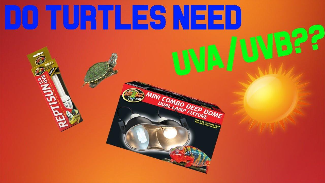 Do Turtles Really Need Uva Uvb Basking
