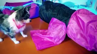 первая реакция котенка и собак на тоннель кошка и собаки играют в тоннеле magic family