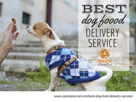 Best Dog Food Delivery Service 2019: PetFlow vs Chewy vs