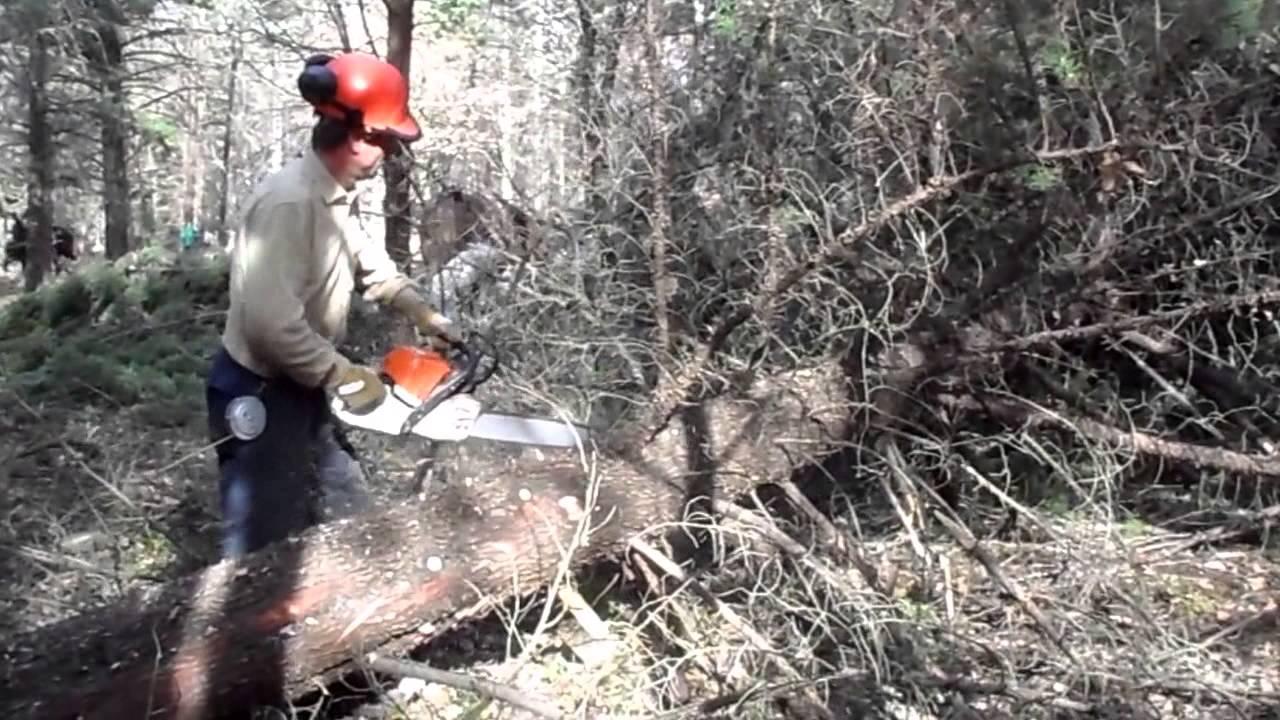 Sramatura della pianta youtube for Pianta della foresta di pioppo