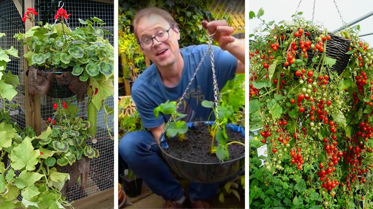 How To Grow Fruit Vegetables In Hanging Baskets Youtube