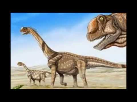 TOP TEN LARGEST ANIMALS EVER TO LIVE ON EARTH - YouTube
