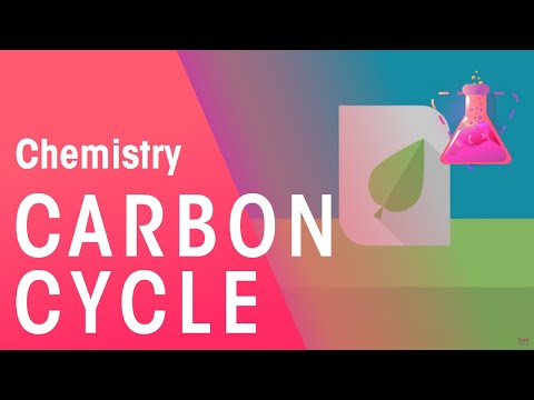 What Is The Carbon Cycle - Part 1 | Chemistry for All | FuseSchool