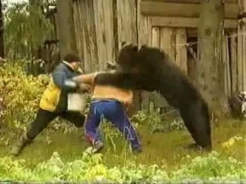 do black bears attack humans - 480×360