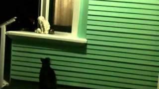 "Cat Video ""Hello? Anyone Home?"