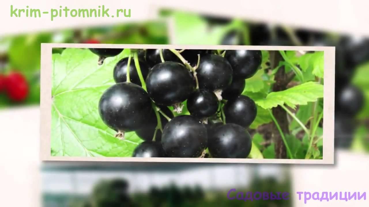 Эксклюзивное видео из частного питомника роз Рязанова - YouTube
