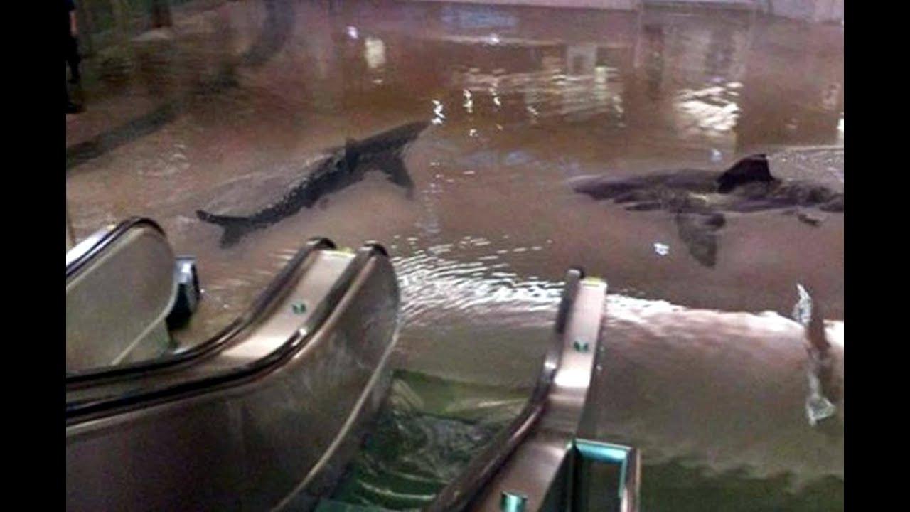 Tiburones en el metro