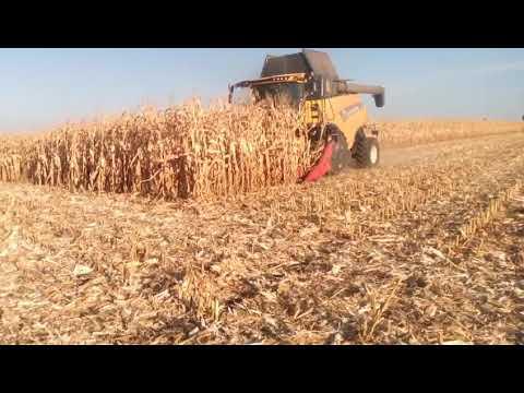 Уборка кукурузы 2019.