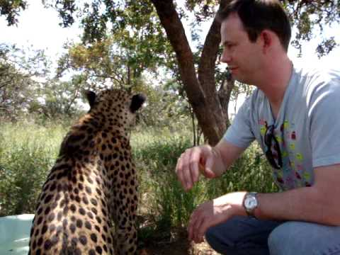 Cheetah Encounter 1- Mokolodi Nature Reserve - Gaborone, Botswana 19th Feb 2010