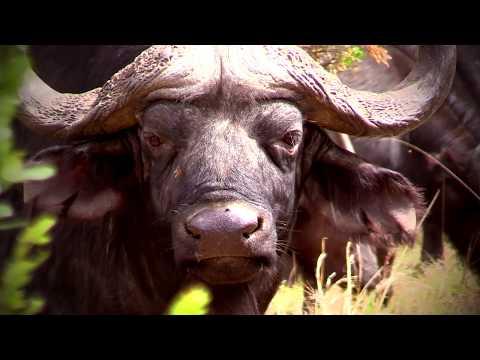 African Hunting Safaris - Video1