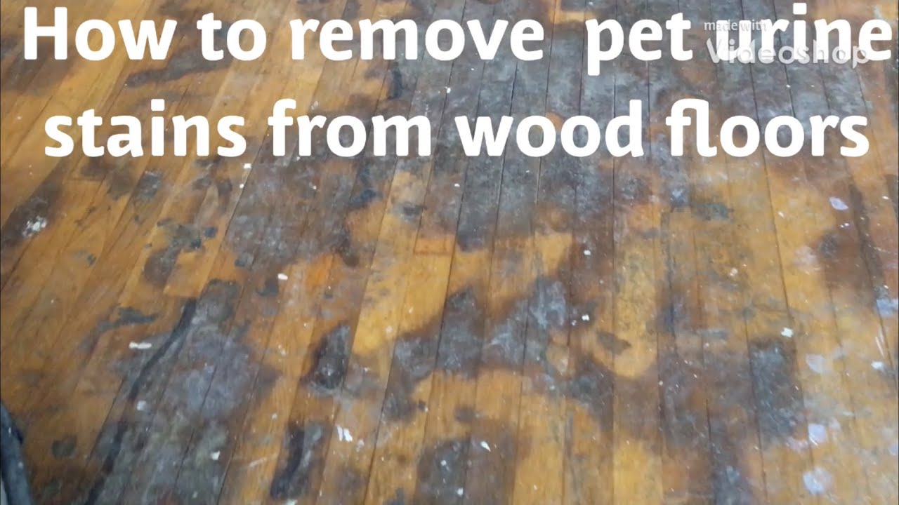 How To Remove Pet Urine Water Damage Stains From Wood