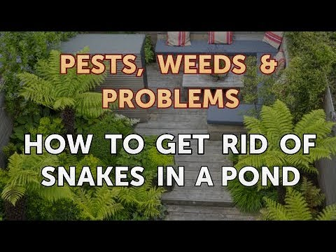 How To Get Rid Of Snakes In A Pond