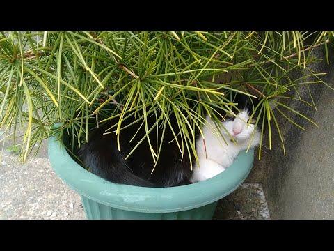 Poundland Cat Treat Test With China And Hutchey.