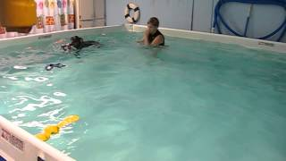Doberman Pinscher Swimming Lesson At Healing Waters Ce