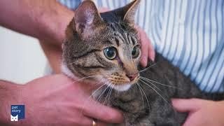 Как подстричь когти кошке в домашних условиях?