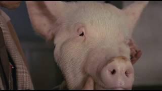 被華盛頓郵報譽為最具挑逗的美食感官電影之首《蒲公英》(Tampopo),是日...